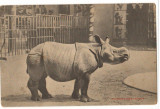 CPI (B9759) CARTE POSTALA - RINOCER INDIAN. PARC ZOOLOGIC ANVERS