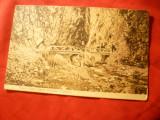 Ilustrata Ramnicu Valcea Pod Poteca dupa Matca Bistritei (Valcea)1911 ,semnaturi