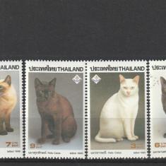 Fauna, pisici de rasa Tailanda. - Timbre straine, Nestampilat