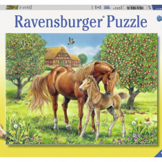Puzzle cai pe camp, 100 piese - VV25361, Ravensburger