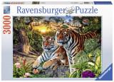 Puzzle Tigri, 3000 piese - VV25257, Ravensburger