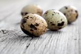 Ouă proaspete de prepeliță