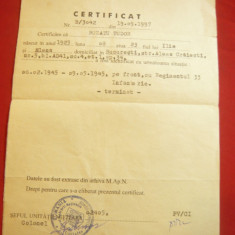 Certificat de participare la al II-lea Razboi Mondial emis de MAN 1997