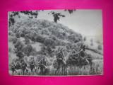 HOPCT 40529 VANATORI DE MUNTE IN 1966 -CARTE POSTALA MILITARA -RPR-CIRCULATA