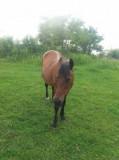 Cal cu caruta