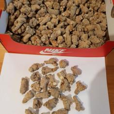Panax Notoginseng! San Qi! Radacina 100% naturala, din China