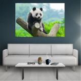 Tablou Canvas Panda, Dimensiunea 80 x 50 cm