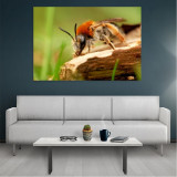 Tablou Canvas Bee, Dimensiunea 80 x 50 cm