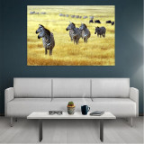 Tablou Canvas Zebra, Dimensiunea 80 x 50 cm