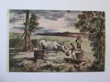 Carte postala colectia E.Marvan,adapatul boilor,circulata 1926, Printata