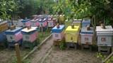 Vand familii de albine si roiuri