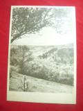 Ilustrata Moldova Noua - Vedere spre Dunare anii'50