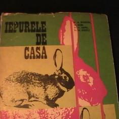 IEPURELE DE CASA- CRESTERE SI VALORIFICARE-AL. GEORGEONI-GH. IACOB-FR.KAPPEL-, Alta editura