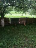Vand 4 familii de albine