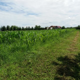 Teren intrare Padurea Noroieni, 15 ari, 25 mf la asfalt - 2.550 euro/ar, Teren intravilan