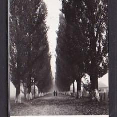 ROMANIA 1961 - BACAU. SPRE BISTRITA. ILUSTRATA ALB-NEGRU CIRCULATA, FD72, Fotografie