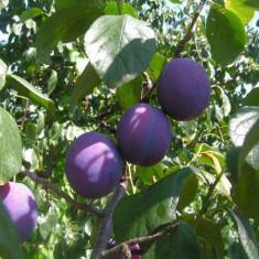 Tuica tare de prune curata si de calitate (35 - 40 de grade)