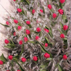 Flori Lalele Zambile