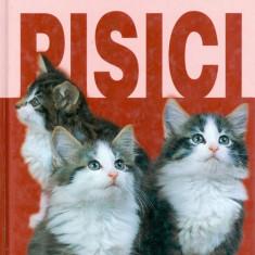 Pisici - Carte Zoologie