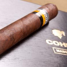 Cohiba Maduro 5 Genios