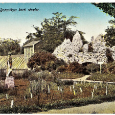 Cluj gradina botanica, Kolozsvar botanikus kert ilustrata aprox 1915 - Carte Postala Transilvania dupa 1918, Necirculata, Printata, Cluj Napoca