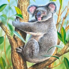 Puzzle Castorland - 120 de piese - Koala