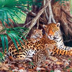 Puzzle Castorland - 3000 de piese - Jaguars in the jungle