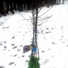 Pepiniera pomi fructiferi com beuca jud teleorman