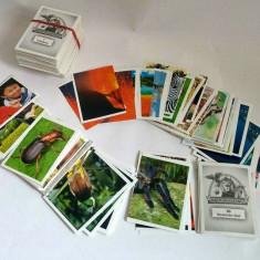 Lot 376 cartonase de colectie Unsere Wunderwelt