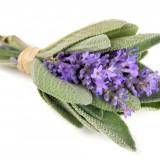 Salvia Officinalis - seminte