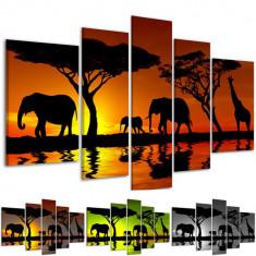 Tablou decorativ modern wild Africa model BM6767