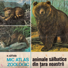 Mic atlas zoologic - Animale sălbatice - Carte Zoologie