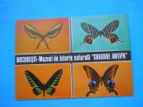 HOPCT 36090  FLUTURI  -MUZEUL ISTORIE  NATURALA  ANTIPA  BUCURESTI -NECIRCULATA