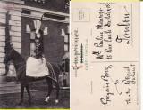 Casa regala - Principesa  Maria calare-rara, Circulata, Printata