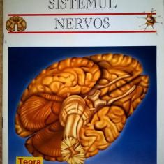 Sistemul nervos {Lumea invizibila}