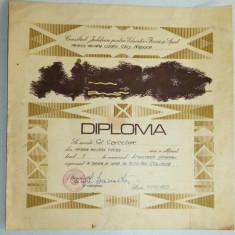 Diploma M.A.N. - R.S.R. -U.M. Cluj Napoca - Aruncarea Grenadei - Diploma/Certificat