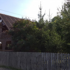 Imobil (3 constructii, teren de 1100mp)