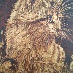 Pisicuță în iarbă