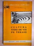 Mihalache Leonida - Cultura vitei de vie pe terase