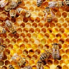 Roi si stupi de albine