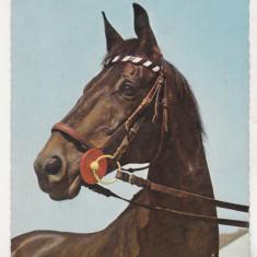 Bnk cp  Carti postale tematice - Cai - necirculata, Printata, Germania