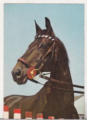 bnk cp  Carti postale tematice - Cai - necirculata foto