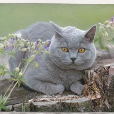 Bnk cp  Carti postale tematice - Pisica - necirculata, Printata, Germania