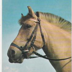 bnk cp  Carti postale tematice - Cai - necirculata
