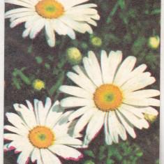 bnk cld Calendar de buzunar 1982 - Loto-pronosport