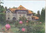 Bnk cp Darmanesti - Tabara de pionieri si scolari - necirculata, Circulata, Printata