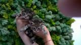 2 pisoi spre adoptie