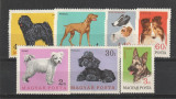 Fauna ,caini de rasa ,Ungaria., Nestampilat