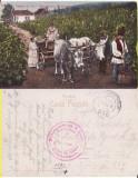 Port popular) -WWI,WK1-militara-culesul viei, vinificatie, Circulata, Printata