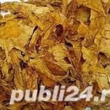 Frunze tutun --tutun frunze-- fara cotoare! calitate superioara 1kg=65 lei